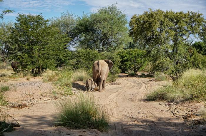 Elefanten-Safari