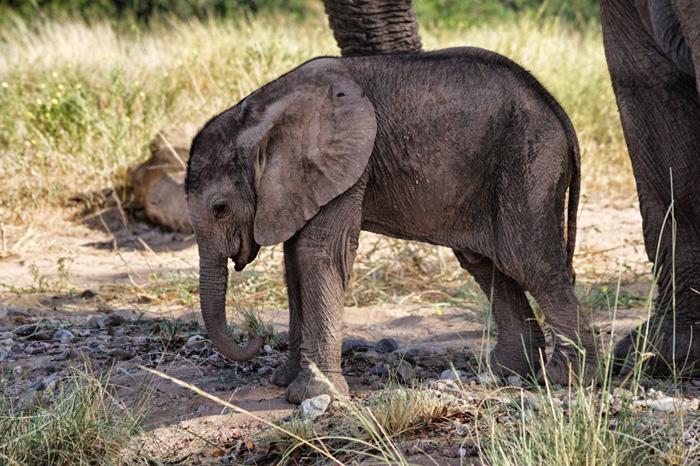 Elefantenbaby