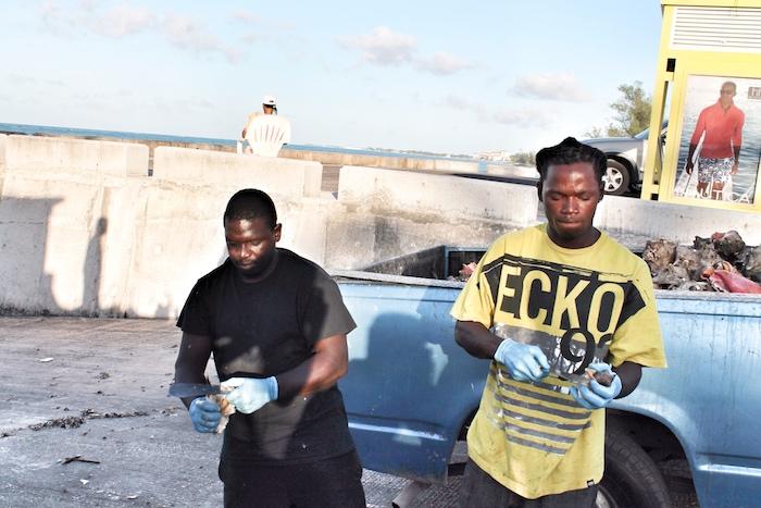 Bahamas Conch