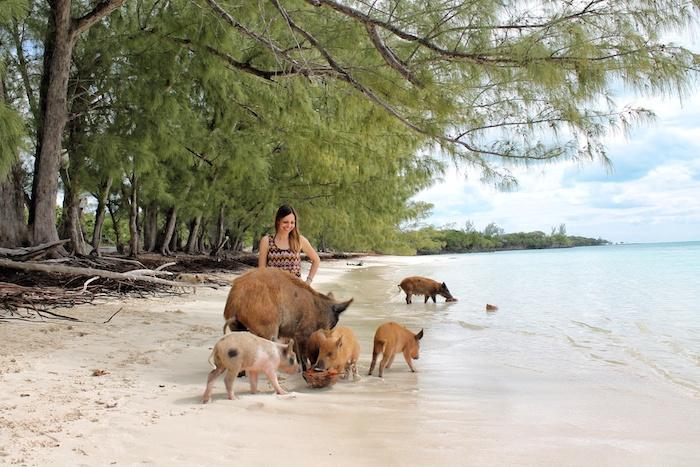 Schweine bahamas cay