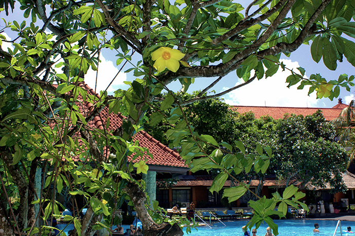 Nusa-Dua-Pool-mit-Pflanzen