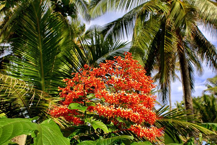 Reisetipps-Westbali_Rote-Pflanze
