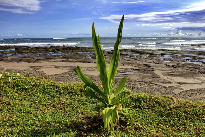 Reisetipps-Westbali_Strand-mit-Pflanze