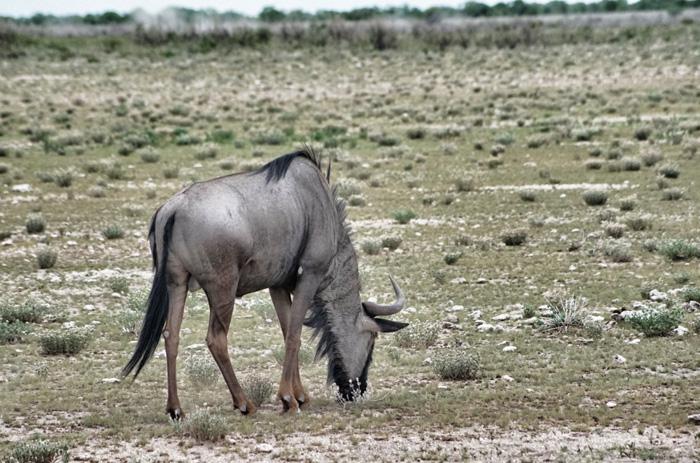 Safari-Namibia