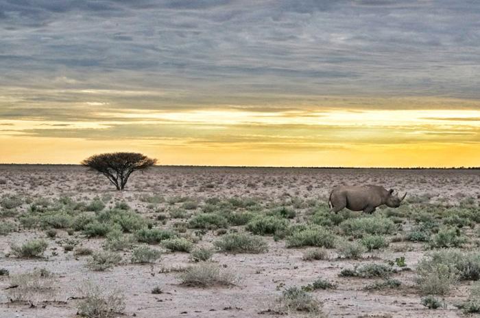 Sonnenaufgang-Nashorn