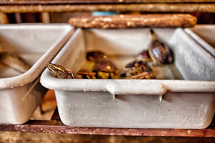 Alleine in den Urlaub - Schildkröten