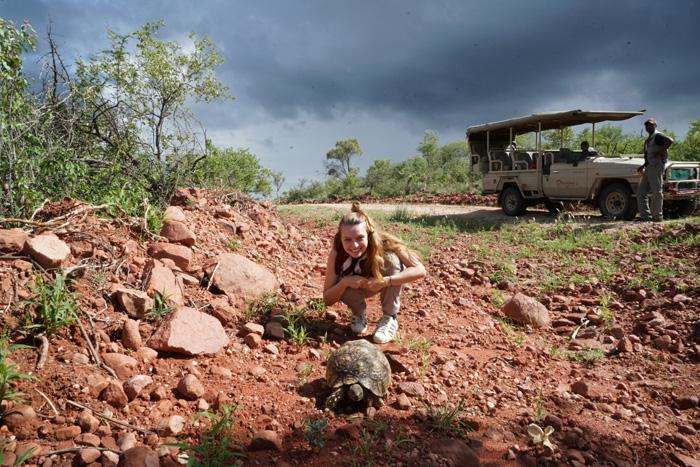 Christine-Neder-Schildkröte