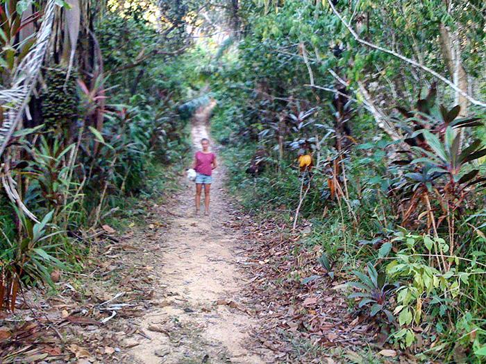 Mittelamerika-Dschungel