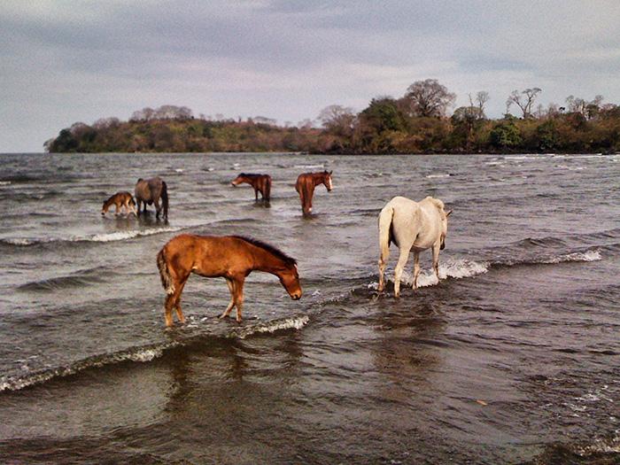 Mittelamerika-Pferde