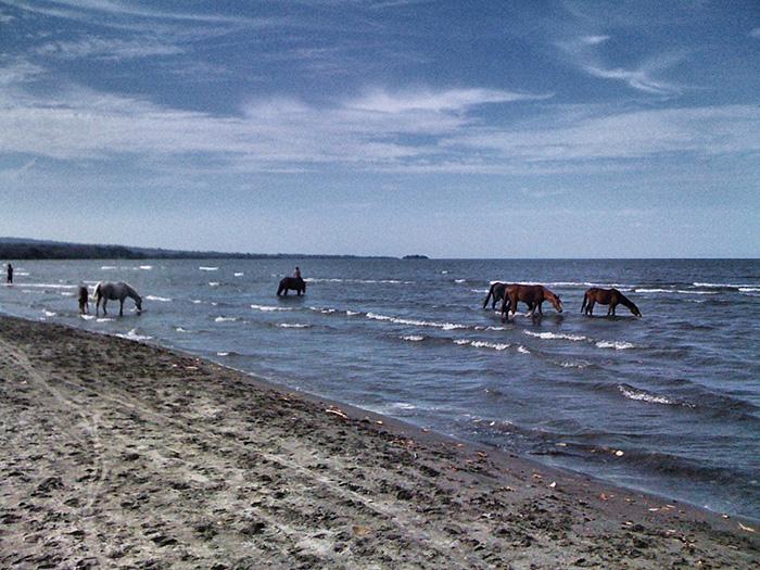 Mittelamerika-Pferde2
