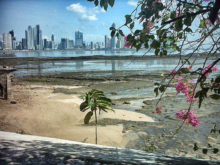 Panama-Skyline-Strand-Blumen
