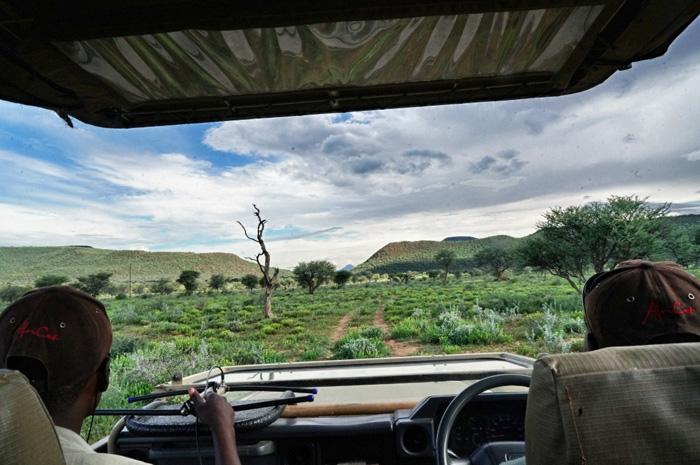 Safari-Africat