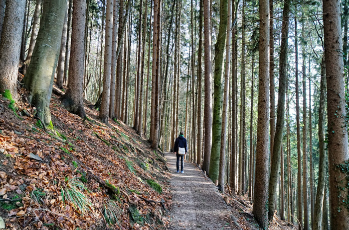 Wandern-Tegernsee