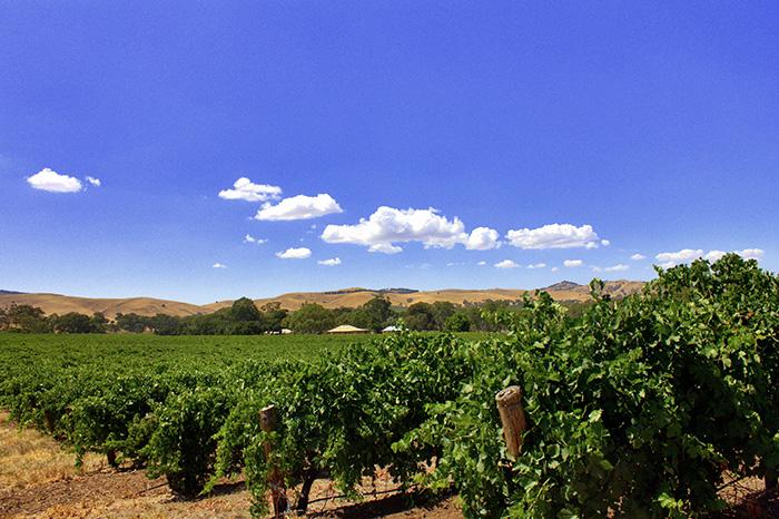 Barossa-Weinfelder