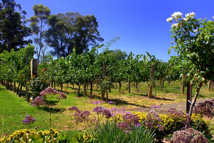 bunte-Pflanzen