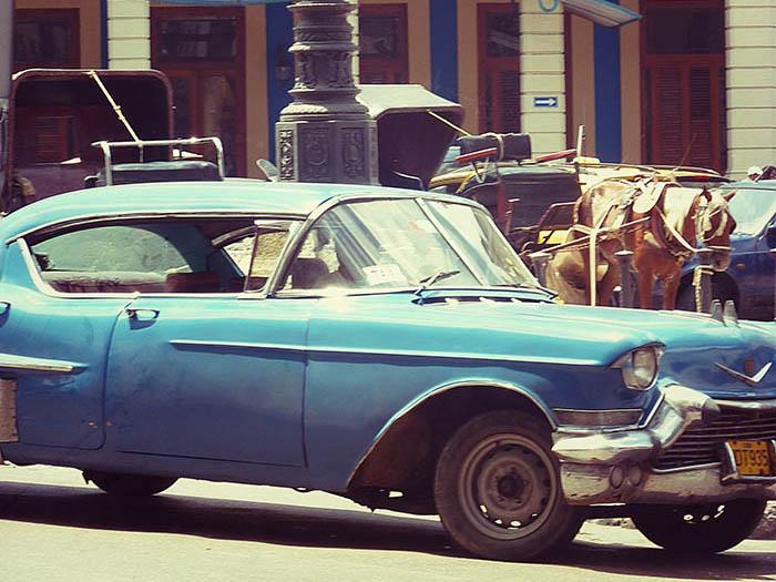 Havanna_Oldi-Pferd