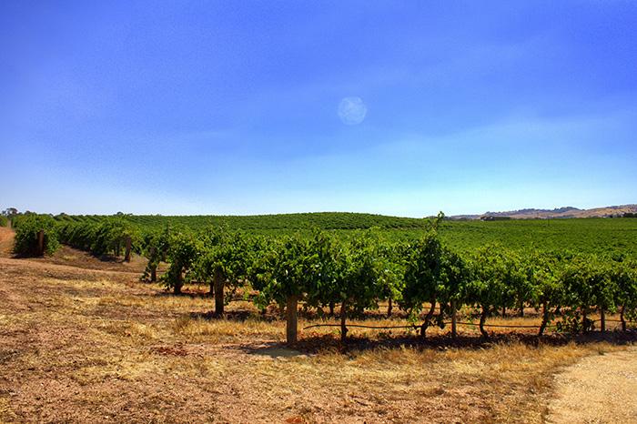 Jacobs-Creek-Weinfelder