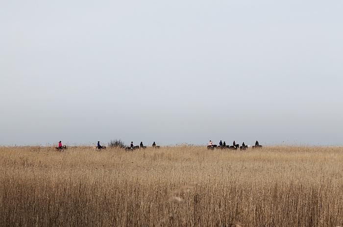 Pferde Nordsee Ording