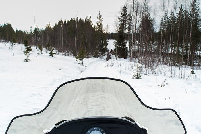 snowmobile_wälder_lappland