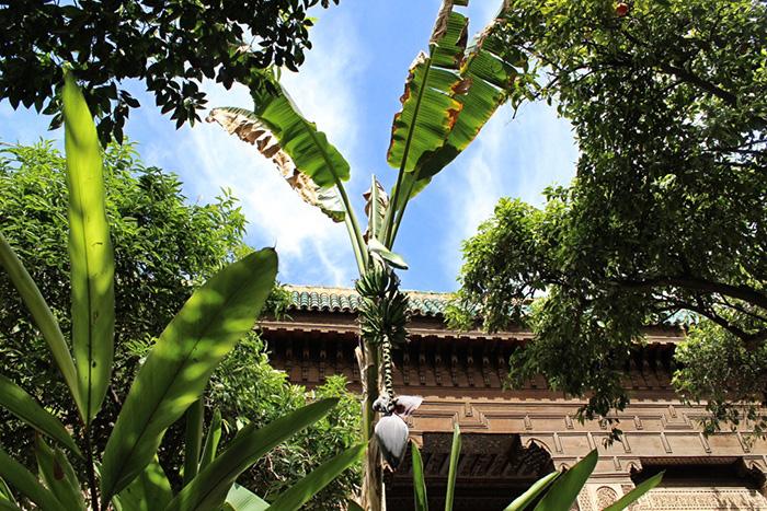 Urlaub-in-Marakkesch---Himmel-und-Pflanzen