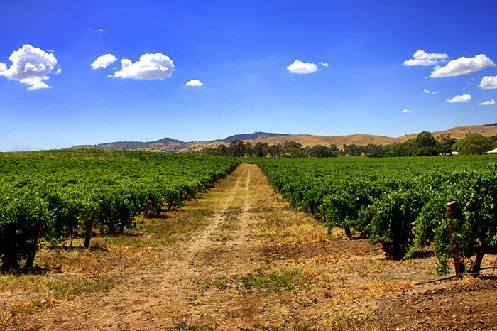 Barossa Valley - Weinfelder2