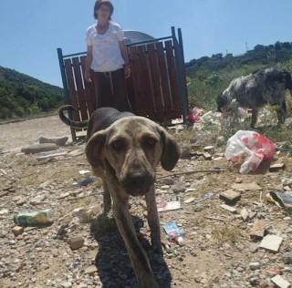 Mein Herzensprojekt – die Tierhilfe Montenegro! Bitte helft mir!