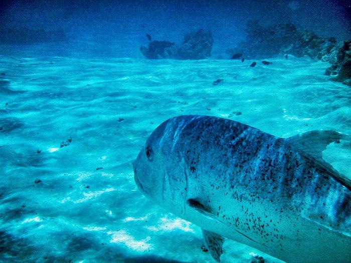 Cook Islands-aitutaki-schnorcheln2