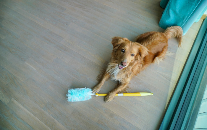 Boris-Swiffer