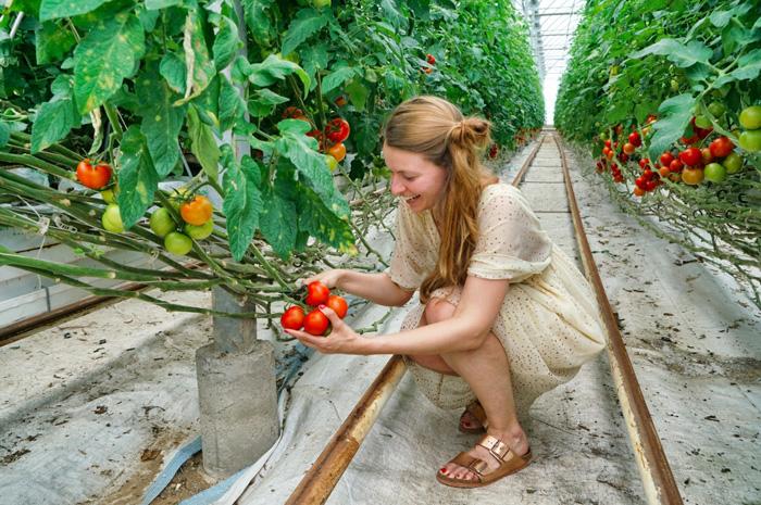 Christine-Neder-Tomaten