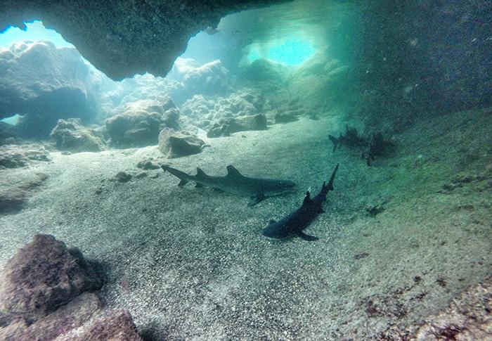 Ecuador-Abenteuer-Haie