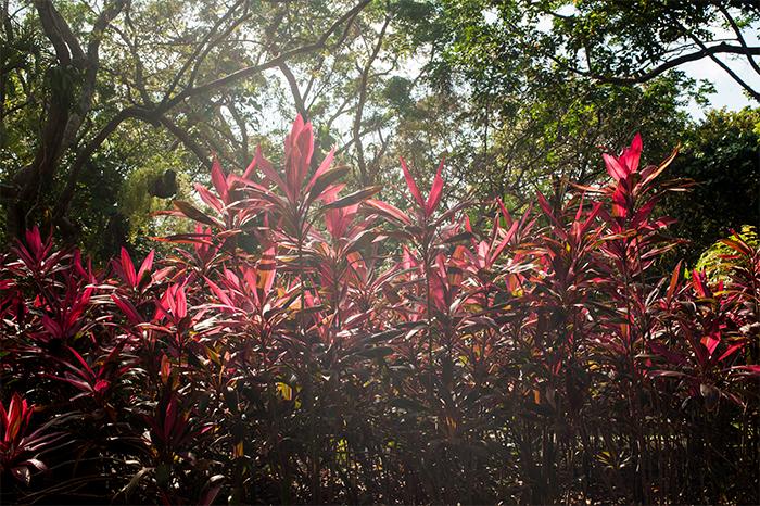 gumbalimba_pflanzenwelt