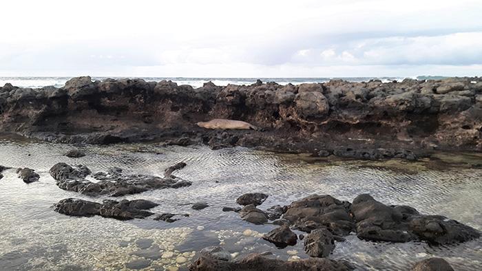 Hawaii-Kaena-Point5