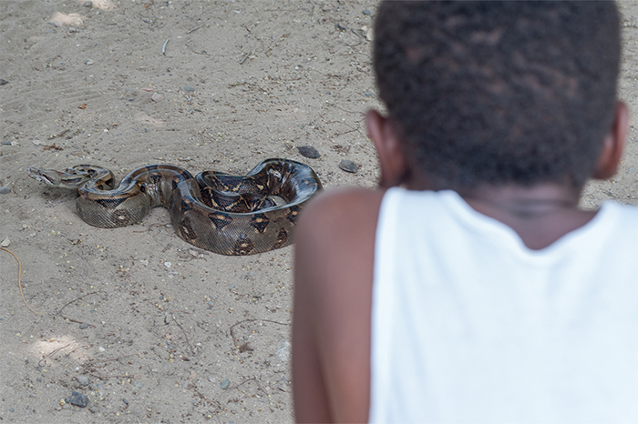 honduras_boy_snake