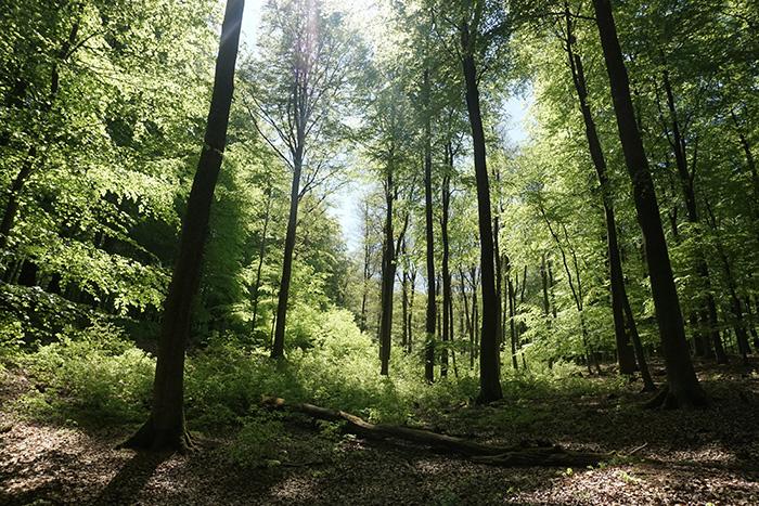 Nationalpark Eifel-buchenwald