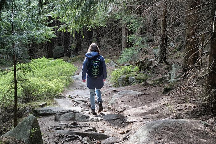 kkloeber_harz_7_abstiegwald