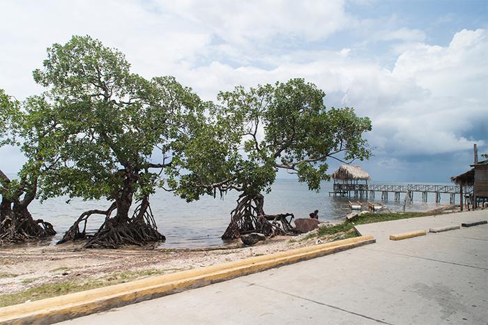 mangroven_puntagorda