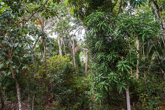 panama_gamboa_rainforest