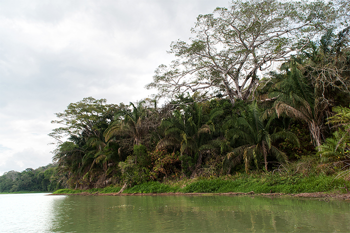 panama_lake_gatun_trees
