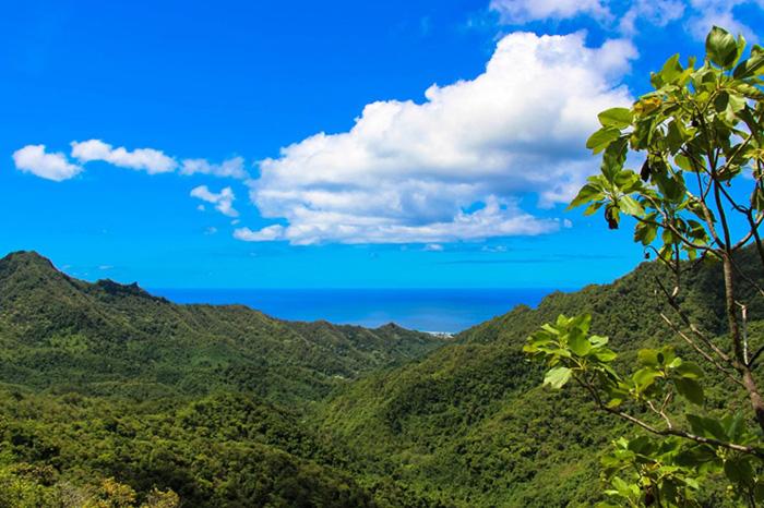rarotonga-cross-island-track