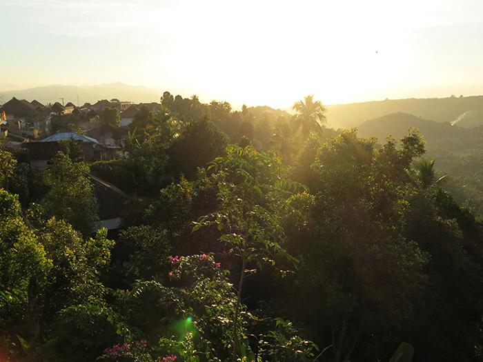 Bali Reisetipps-Dschungel