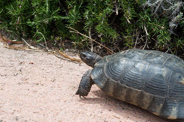 schildkröten bis ganz unten wow
