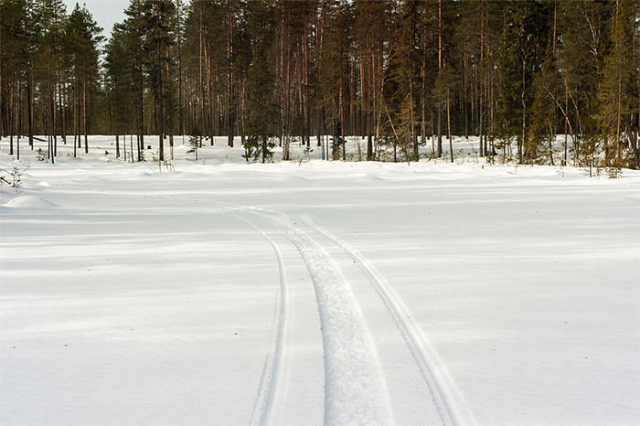 snowmobile_tracks_wälder_svansele