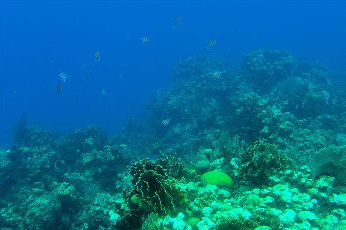 unterwasserwelt_roatan