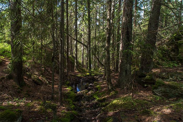 bergslagsleden_wald