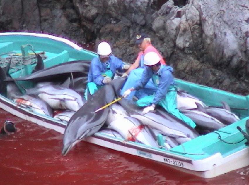 Delfinjagd