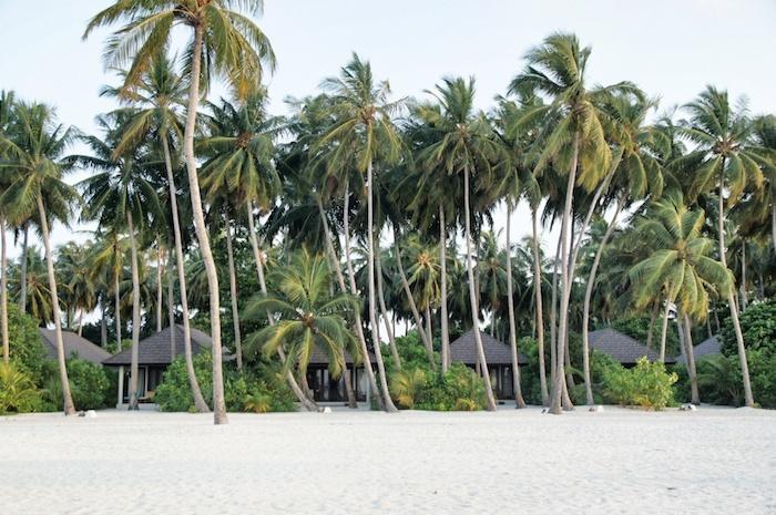 Malediven Palmengarten