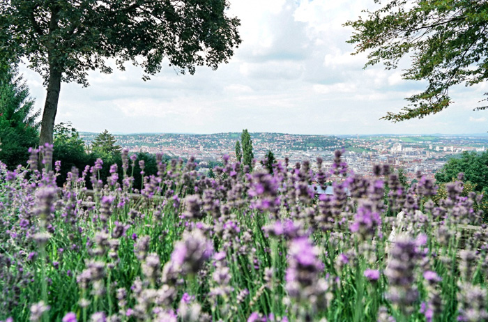 Tips for Stuttgart – flowers
