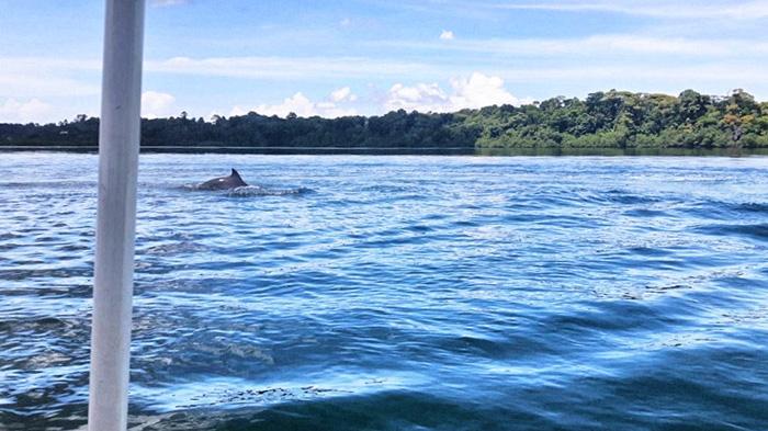 bocas-del-toro-delfin