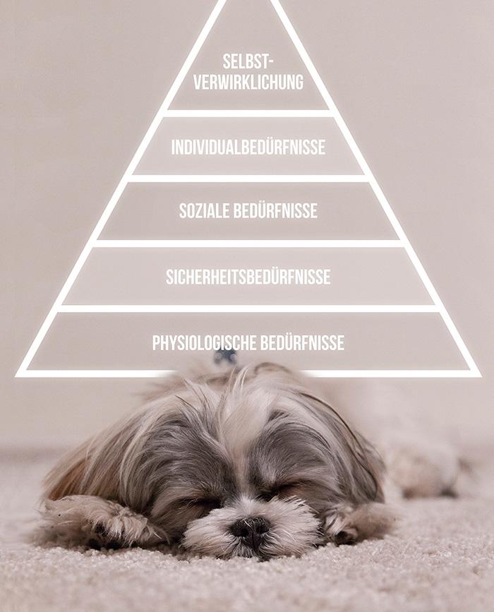 Hund-in-der-Stadt-Beduerfnispyramide