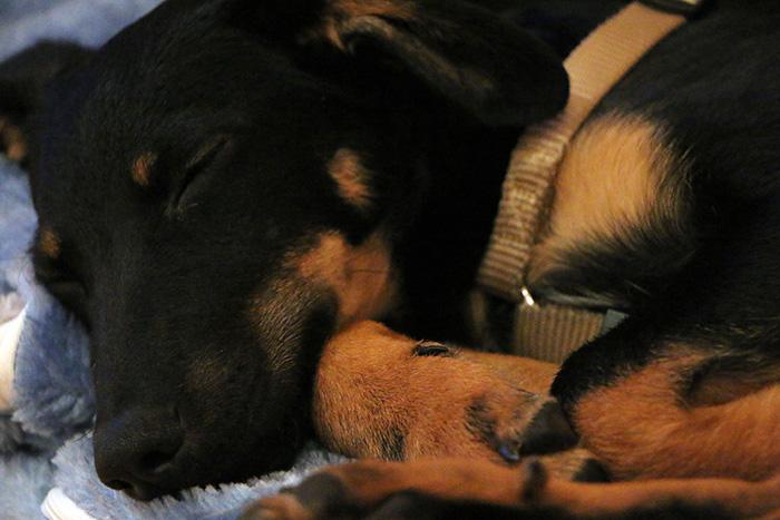 Hund-in-der-Stadt--Sicherheitsbeduerfnisse